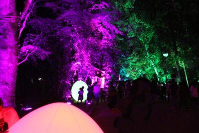 下鴨神社 糺の森の光の祭_4